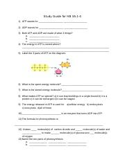 Study Guide for Cellular Energy