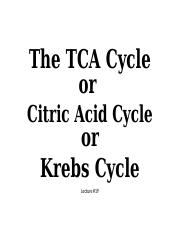 Lecture #19_The TCA Cycle_SV.pptx