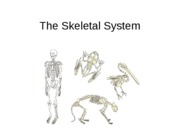 The Skeletal System (1)
