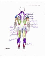 muscle posterior study sheet.pdf