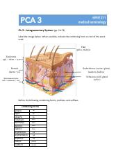 PCA 3 (Integumentary System).pdf