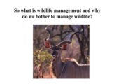 Lecture 2 - What is wildlife management