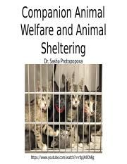 Animal+Welfare+and+Animal+Shelters-2.pptx