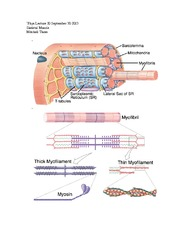 Phys Lecture 10 Skeletal Muscle 1