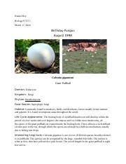Birhday Fungus Biology 9.docx