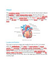 CH.19 Lab. Lecture Heart Bluedoor.docx