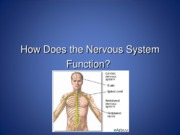 02 - Brain Organization and Nervous system