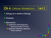Chapter 4 Metabolism Part 2