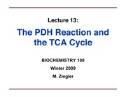 ZieglerLecture13-PDH-TCAcycle-ppt1