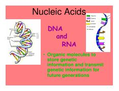 Nucleic Acidspowerpoint-Online Notes.pdf