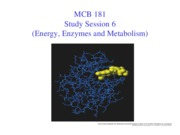 Session 6 (Energy, Enzymes and Metabolism)
