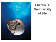 Ch3_Diversity of Life-part II