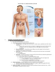 NOTES - Chpt 17 Endocrine System
