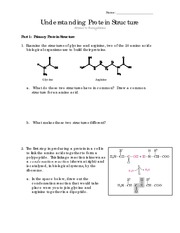 protein structure worksheet. Black Bedroom Furniture Sets. Home Design Ideas