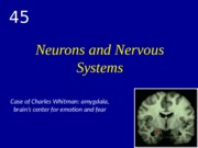 6Chapter_45.Neurons.and.Nervous.System.pptx