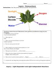 Inquiry - Photosynthesis.docx