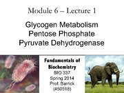 Module-6, Lecture-1 Glycogen Metabolism, Pentose Phosphate, Pyruvate Dehydrogenase