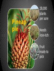 4. Lab 4-1 Growing Pineapples.pptx