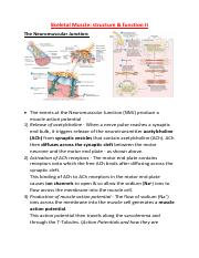 Skeletal Muscle 2