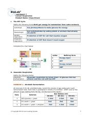 Cell_Respiration_LR.doc
