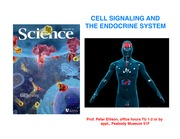 LS2 - Lecture 4 Endocrine System 2013 (1)