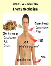 Lecture 5s Energy Metabolism 22 Sept 2016-4