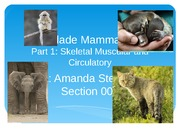 Week 10 Powerpoint - Clade Mammalia