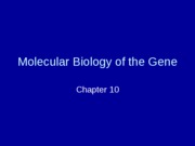 Chapter 10 - Molecular Biology of the Gene