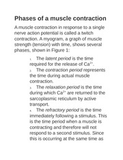 Phases of a muscle contraction