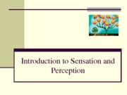 3-Sensation+and+Perception