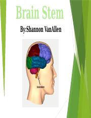 Brain Stem Power Point