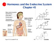 Ch 45 - endocrine system (1 slide per page) (1)
