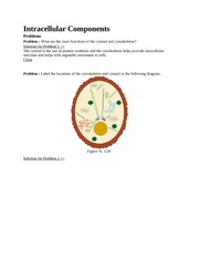 Intracellular Component4