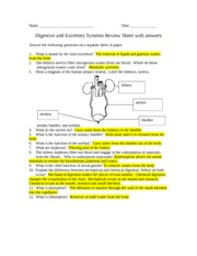 digestive and excretory review sheet with answers