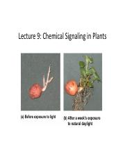 Lecture 9 Chemical Transfer Plants.pdf