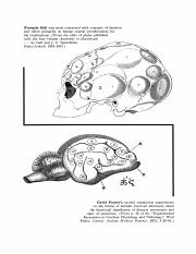 The Functions of the Brain.pdf