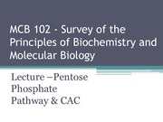 Lecture 3 - Pentose Phosphate Pathway and The Citric Acid Cycle - Su 15