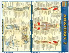 Anatomy Reference Cards