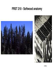 FRST 210 14W - (3) Anatomy softwood - for posting