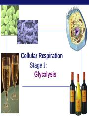 Glycolysis, Oxidation, and Krebs Cycle.ppt