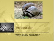 Introduction-116 (1).ppt