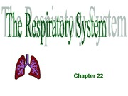 Chapter 9 Respiratory System 2009