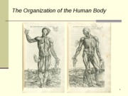 L3-ANH573w10 - POSTED - Organization of the Human Body