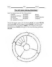 Cell Cycle Coloring.pdf - Name Date Period The Cell Cycle Coloring ...