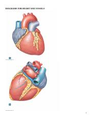 HEART_AND_VESSEL_DIAGRAMS.doc