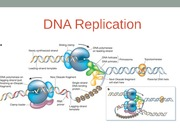 Topic 10- DNA Replication