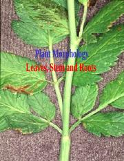 Leaf Stem Root Morphology  ppt taxo