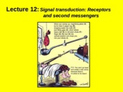 (12) Signal transduction -  Receptors and second messengers.ppt