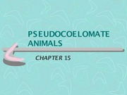 chapter 15 - Pseudocoelomate Animals - Notes