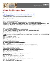 Virtual Eye Dissection Assignment.rtf